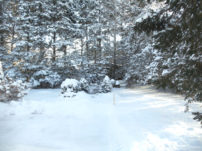 Cottage Lauzon 449 - Winter side yard view